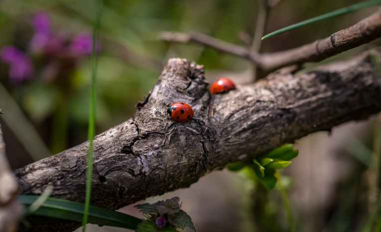 Photo by Anton Atanas - Lady Beetles