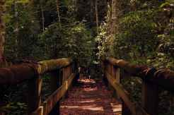 Timber Bridge Walk Way